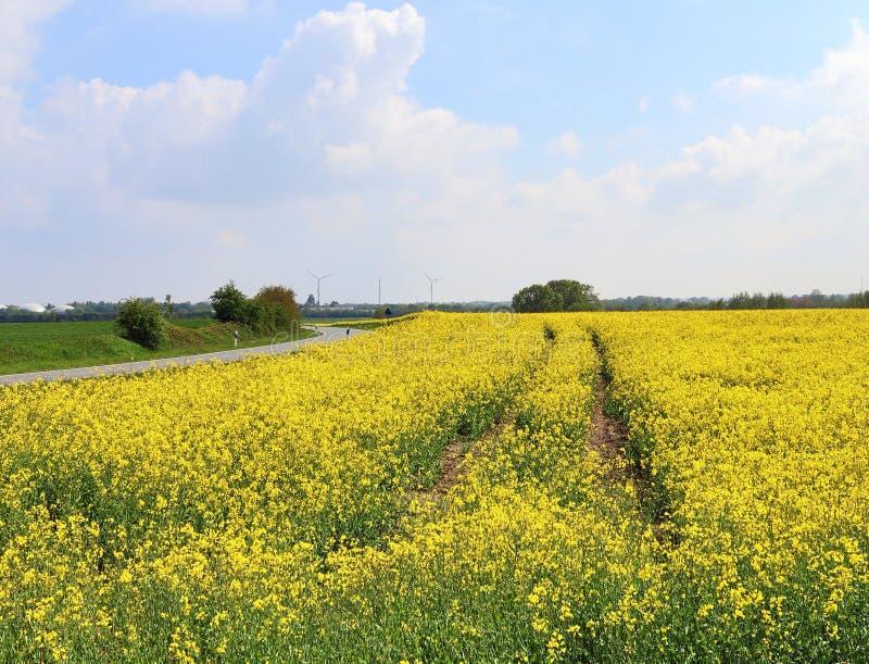 Campo amarillo hermoso de la violaci?n de semilla oleaginosa con un cielo azul soleado en el verano encontrado en Alemania septen foto de archivo