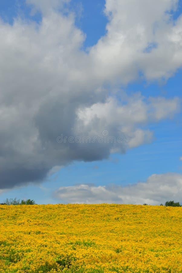 Campo amarillo oscuro imagenes de archivo