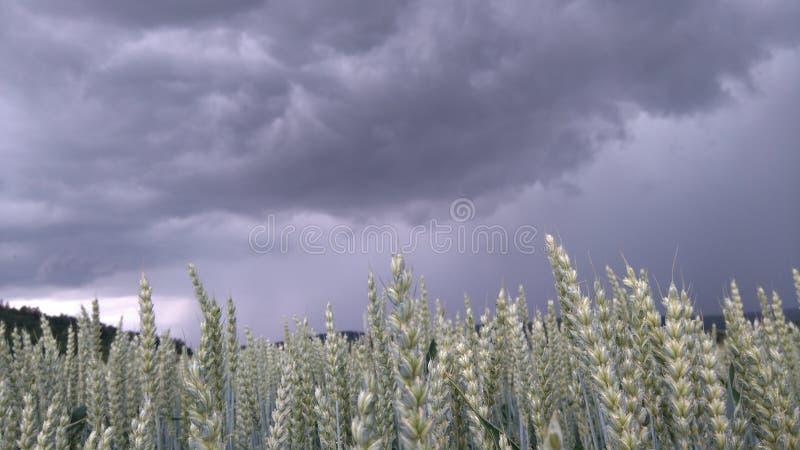 Campo antes da tempestade fotografia de stock