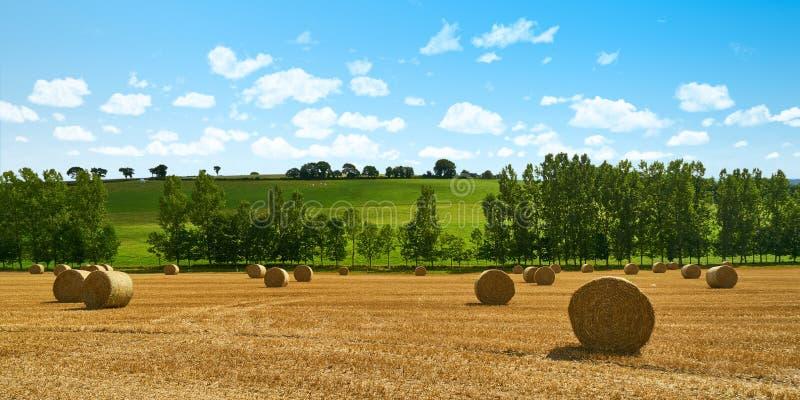 Campo após a colheita como um fundo do encabeçamento do panorama imagens de stock royalty free