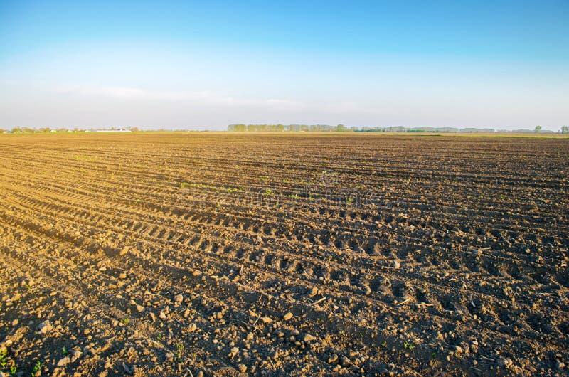 Campo arado ap?s o cultivo para plantar colheitas agr?colas Paisagem com terra agr?cola camas para plantas Agricultura, fotos de stock