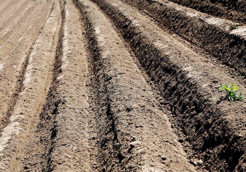 Campo arado sulco na primavera imagens de stock