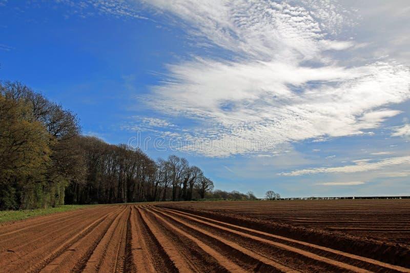 Campo arado y surcado de la patata, maderas de Cawston fotos de archivo