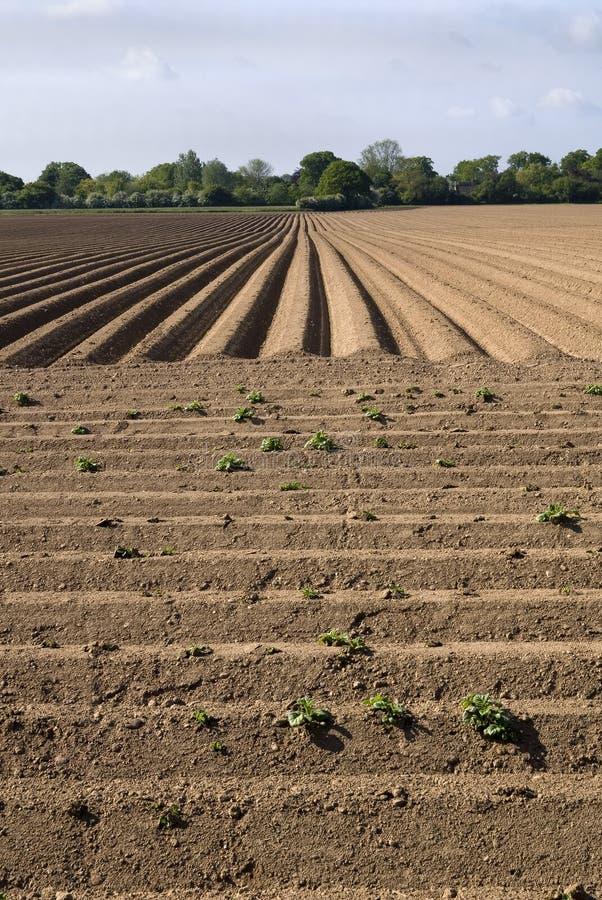 Campo arato dell'azienda agricola fotografie stock