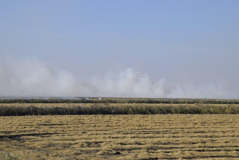 Campo ardiente del paisaje El burning de la paja del arroz en los campos Arroces de arroz imagen de archivo