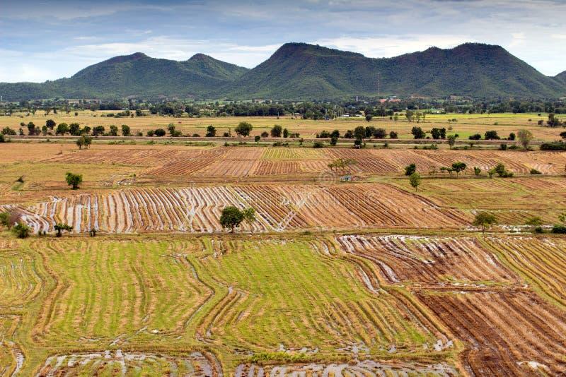 Campo asiático del arroz imagen de archivo libre de regalías