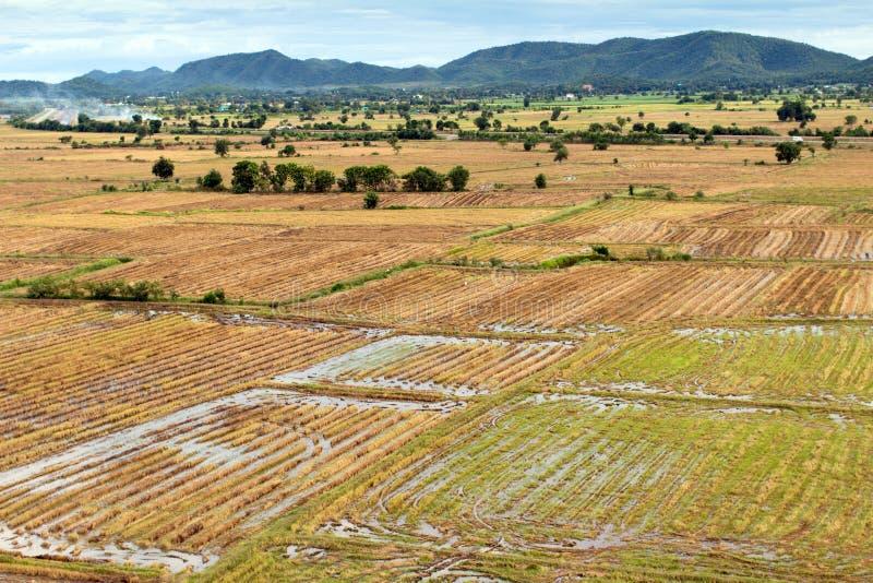 Campo asiático del arroz foto de archivo