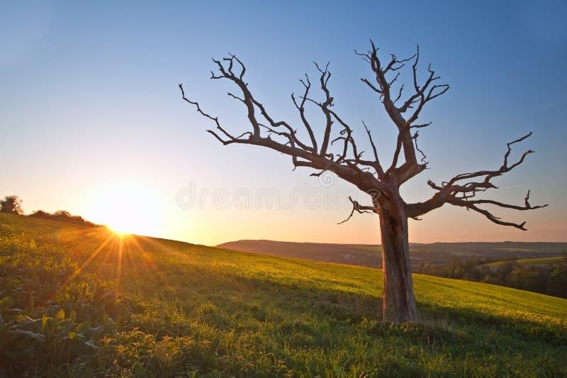 Campo bonito da paisagem do rapeseed no countr foto de stock royalty free