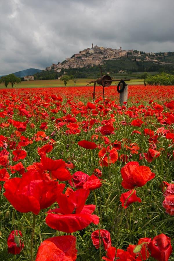 Campo bonito de papoilas vermelhas no campo do Trevi, Úmbria imagem de stock royalty free
