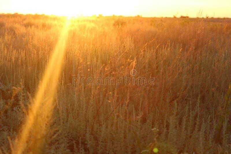 Campo bonito do verão na noite com o sol através dele imagens de stock
