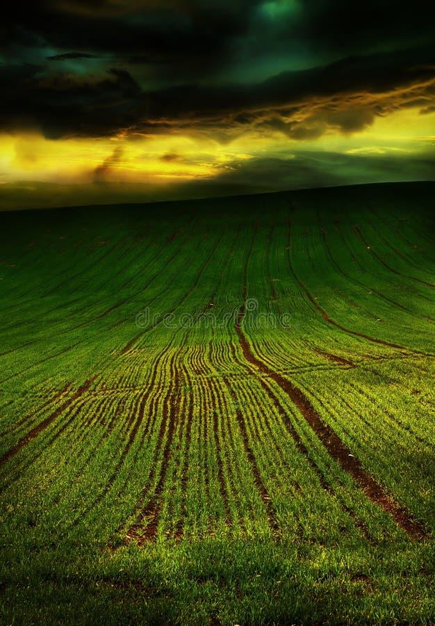 Campo bonito do verde da mola, nuvens antes da tempestade fotos de stock royalty free