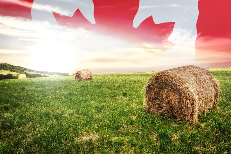Campo canadese dell'azienda agricola fotografia stock libera da diritti