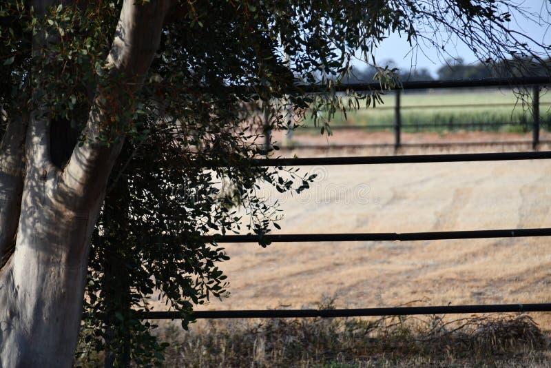 Campo cercado do feno fotografia de stock
