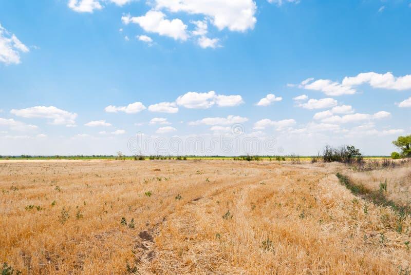 Campo chanfrado, céu azul e nuvens imagens de stock royalty free