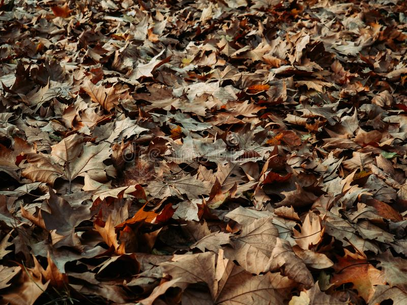 Campo cheio de folhas caídas no outono imagens de stock