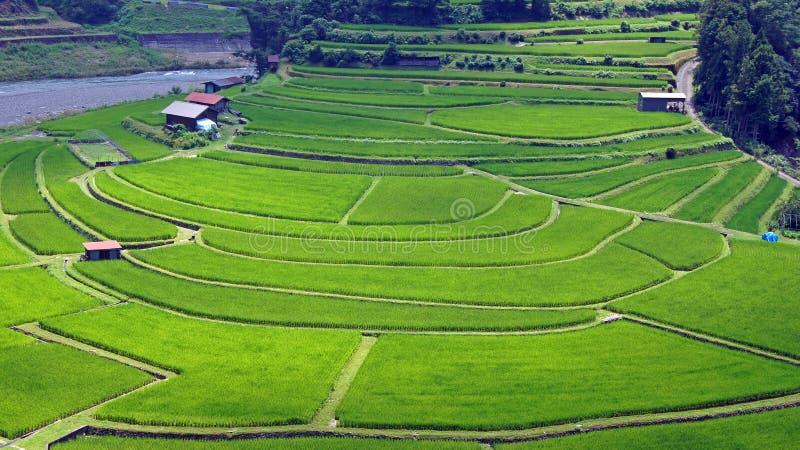 Campo colgante del arroz de Aragijima en Wakayama, Japón fotos de archivo libres de regalías