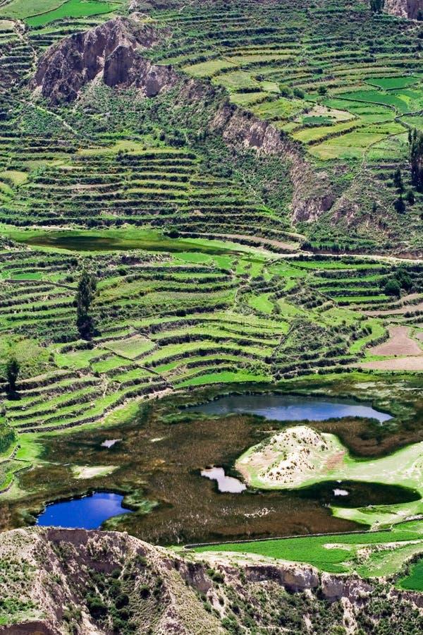 Campo colgante, Perú imagen de archivo libre de regalías
