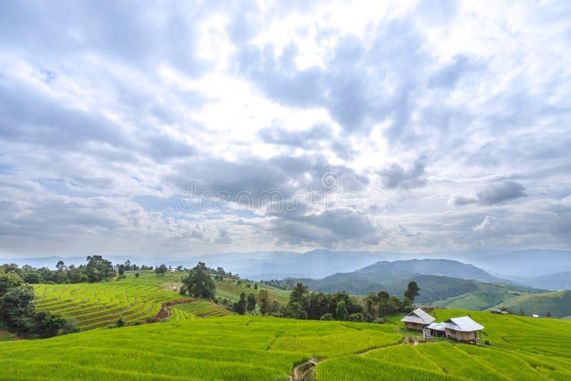 Campo colgante verde de la estación de lluvias, una atracción turística importante del arroz de la naturaleza en PA Pong Pieng, M fotos de archivo