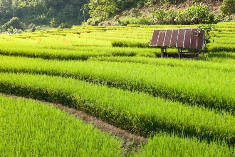 Campo colgante verde del arroz en Chiang Mai, Tailandia imagen de archivo libre de regalías