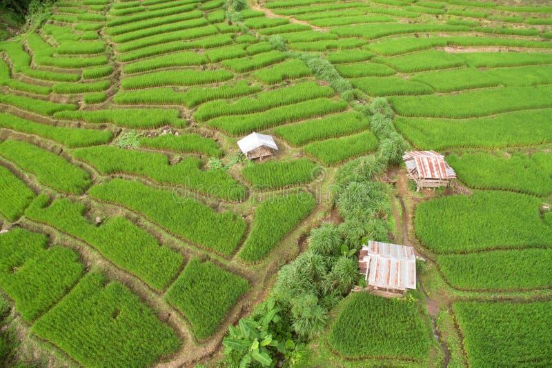 Campo colgante verde del arroz en Chiangmai foto de archivo libre de regalías