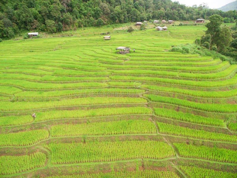 Campo colgante verde del arroz en Chiangmai fotografía de archivo libre de regalías