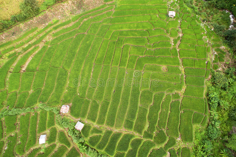 Campo colgante verde del arroz en Chiangmai fotos de archivo