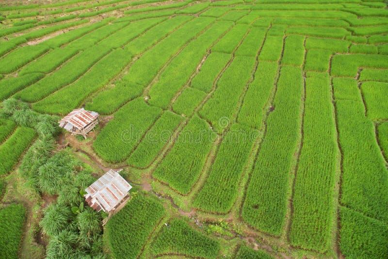 Campo colgante verde del arroz en Chiangmai fotografía de archivo