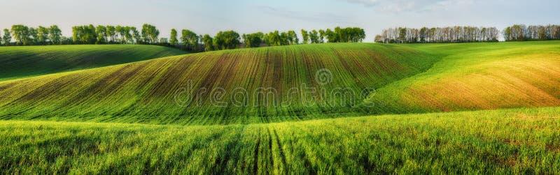 Campo colline pittoresche su un giacimento della molla fotografia stock