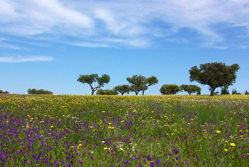 Campo colorato di alentejo. fotografia stock libera da diritti