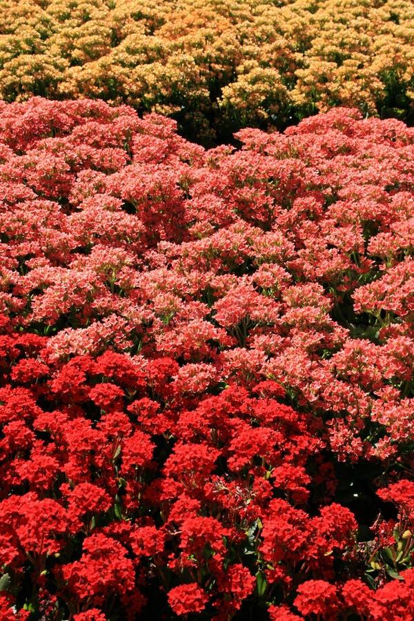 Campo colorido de flores fotografía de archivo libre de regalías