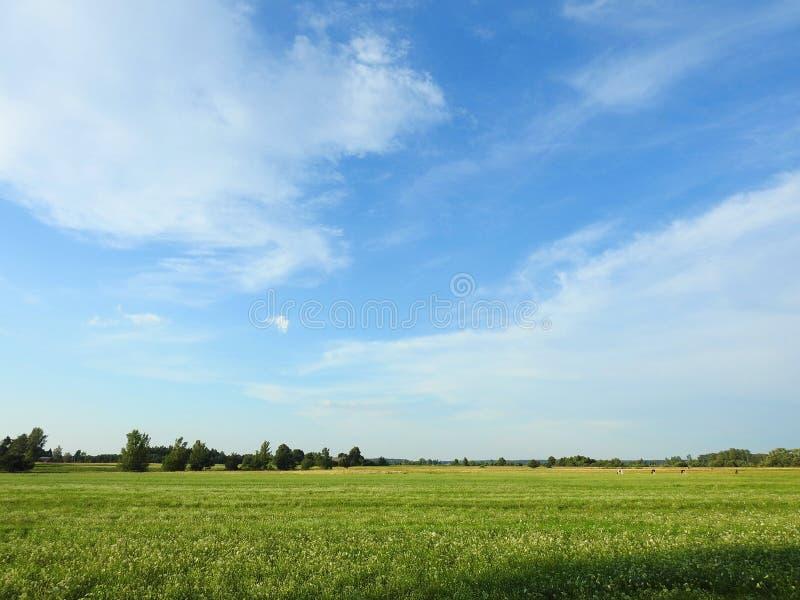 Campo colorido y cielo nublado hermoso, Lituania foto de archivo
