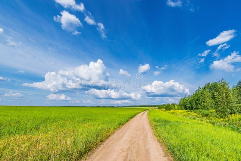 Campo com centeio e estrada imagens de stock
