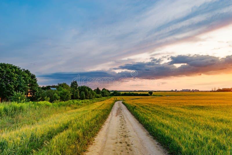 Campo com centeio e estrada fotografia de stock royalty free