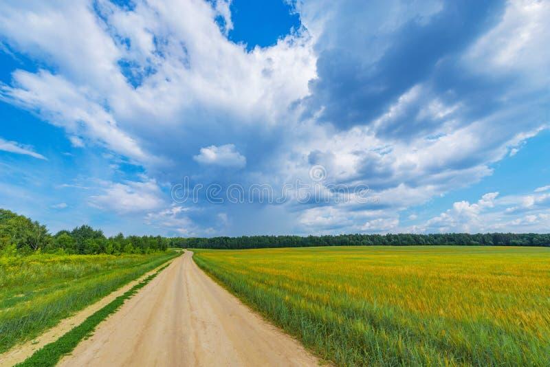 Campo com centeio e estrada fotos de stock royalty free