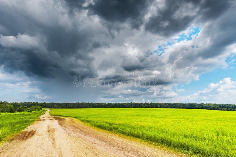 Campo com centeio e estrada foto de stock royalty free