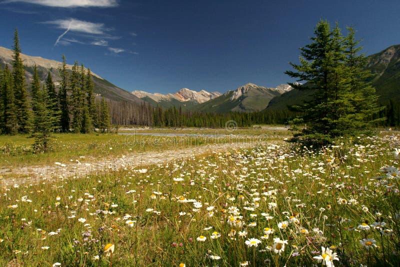 Campo com flores fotografia de stock