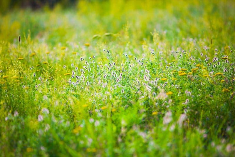 Campo com flores selvagens imagens de stock