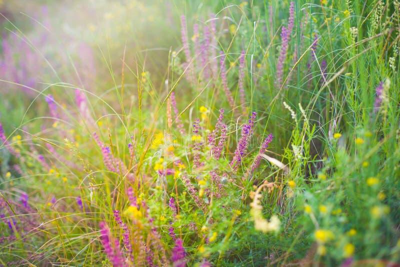 Campo com flores selvagens imagem de stock