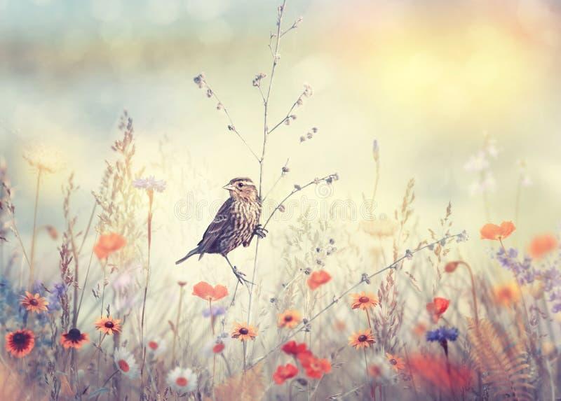 Campo com flores selvagens e um pássaro fotografia de stock