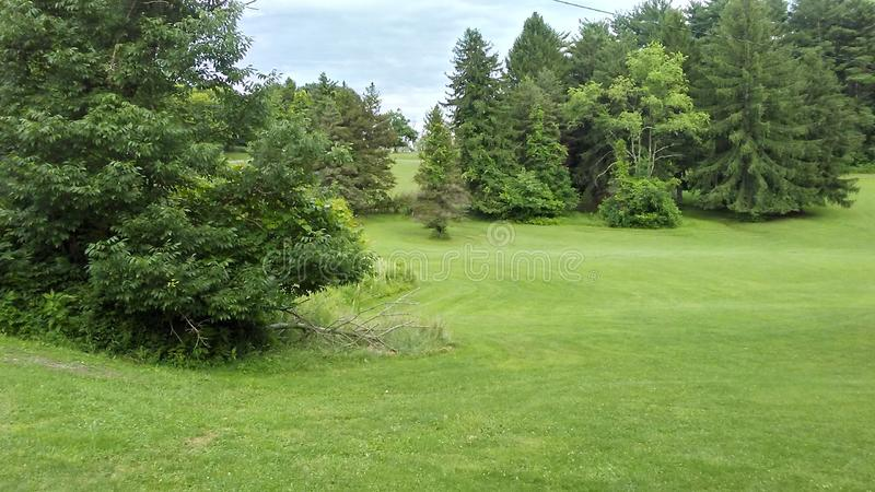 Campo com grama e árvores foto de stock royalty free