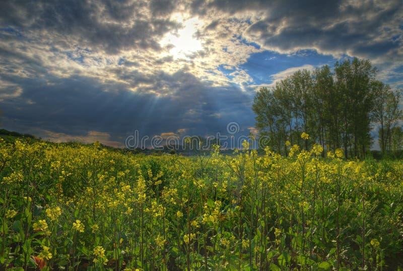 Campo com mostarda, Bulgária fotos de stock royalty free