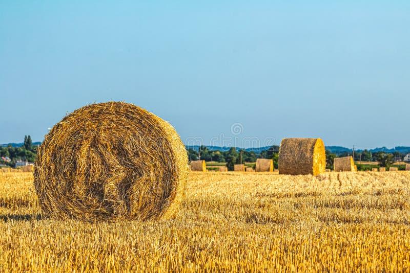 Campo com os pacotes da palha após a colheita em um céu azul do espaço livre do fundo foto de stock