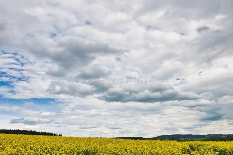 Campo com violação e céu azul com nuvens imagem de stock