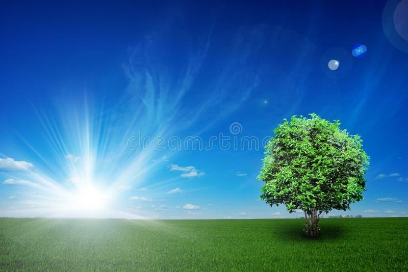 Campo con el árbol y el cielo azul foto de archivo