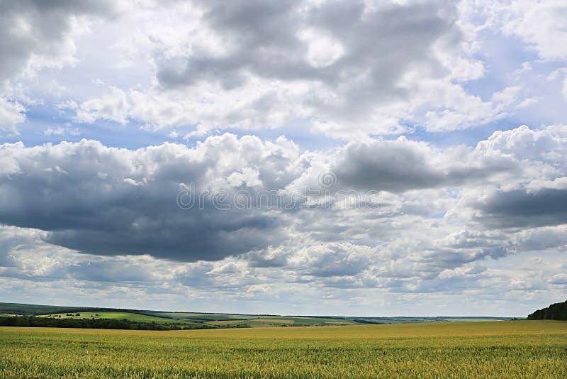 Campo con el campo de trigo y el cielo tempestuoso imagenes de archivo