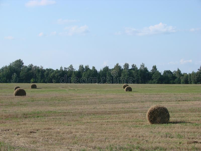 Campo con erba e fieno tagliati in Bielorussia fotografie stock
