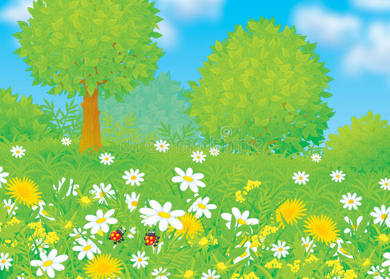Campo con i fiori illustrazione di stock