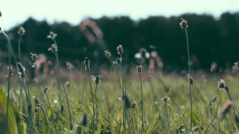 Campo con i fiori, isola Olanda di Ameland wadden i Paesi Bassi fotografia stock libera da diritti