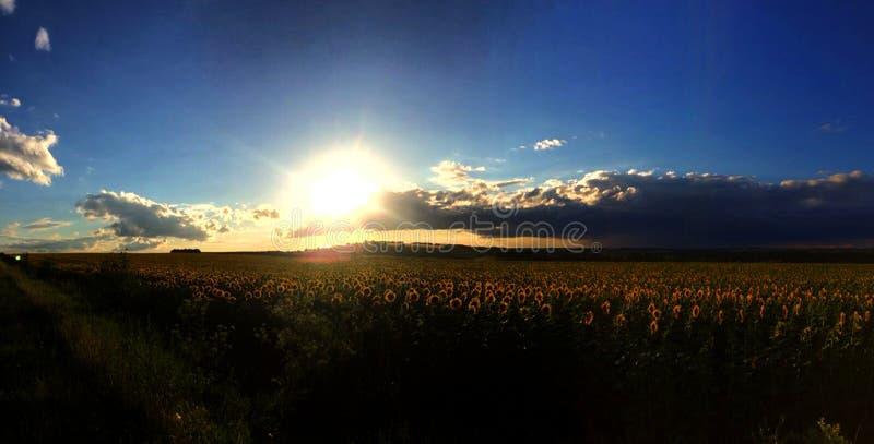 Campo con i girasoli al tramonto fotografie stock libere da diritti