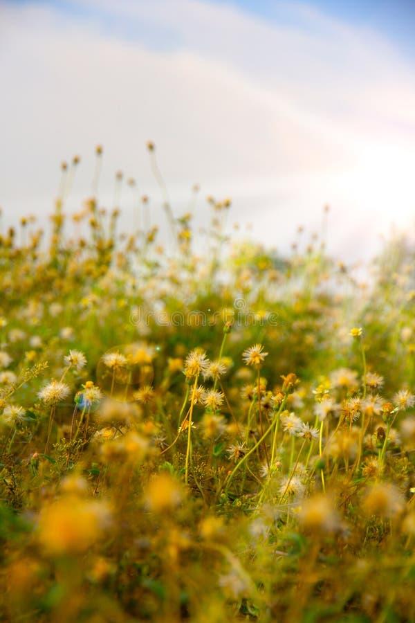 Campo con la luce del sole immagini stock